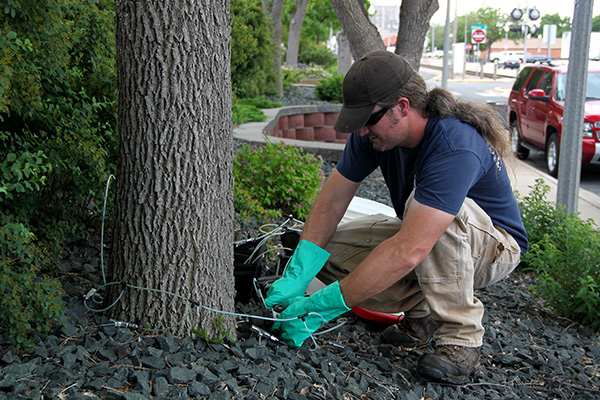 Man drilling hole in tree