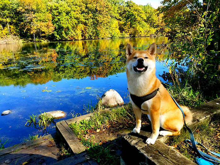 Dog in front of lake