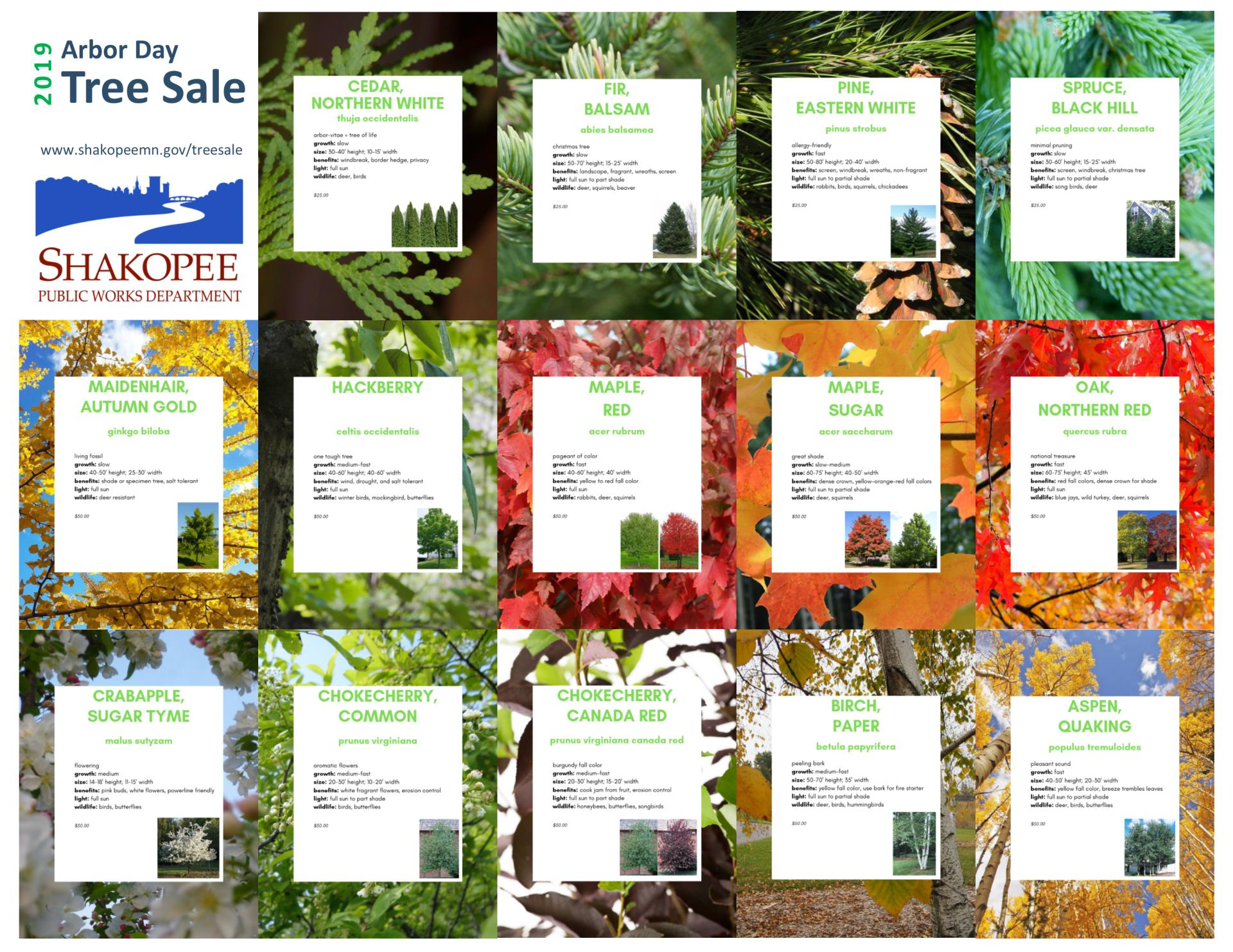 Tree Sale Flyer one-page