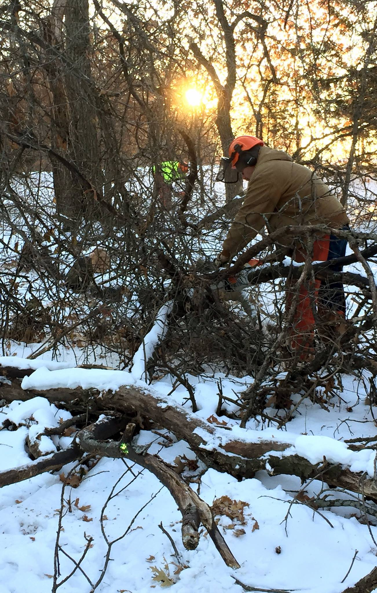 Public Works crew member uses chainsaw on trees