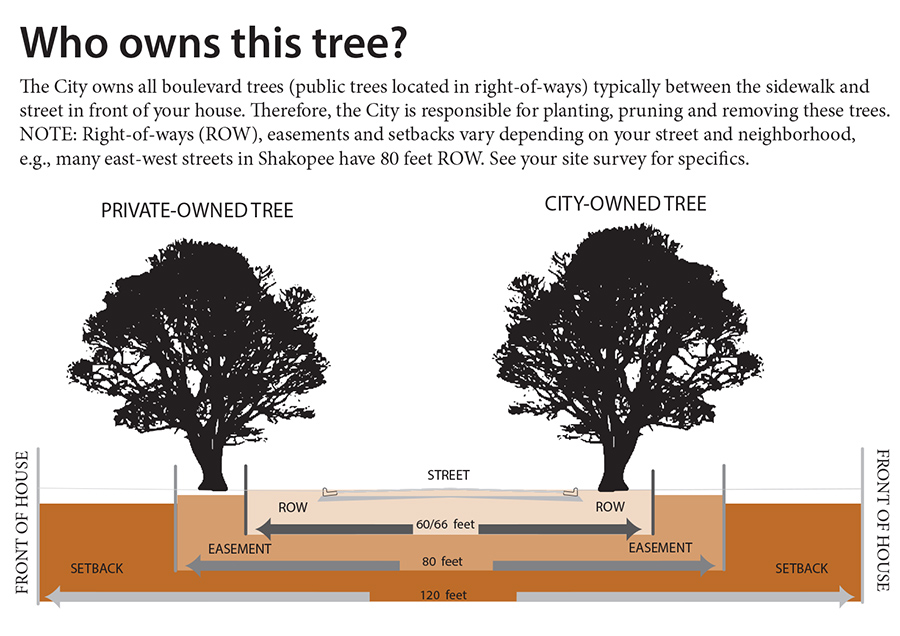 Who Owns Tree Explanation Diagram